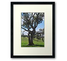 I Love those Eucalypts Framed Print