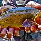 Big Creek Cutty by Conner Lundeen