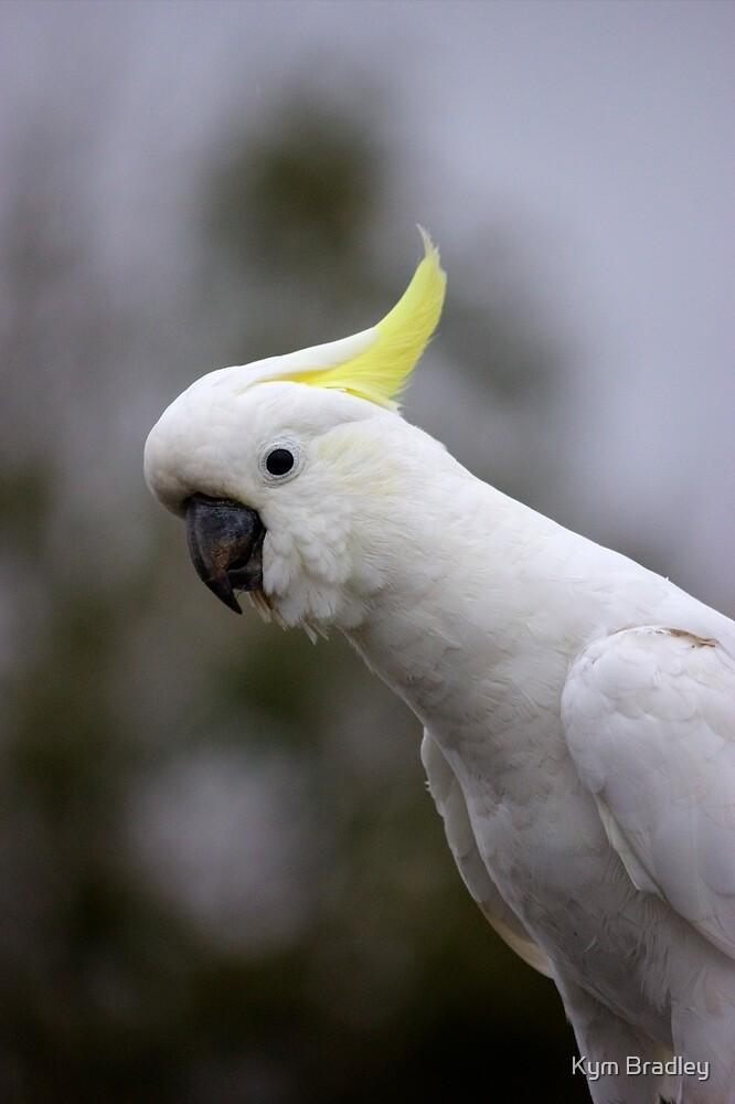 Who's a pretty boy Sulphur Crested Cockatoo by Kym Bradley