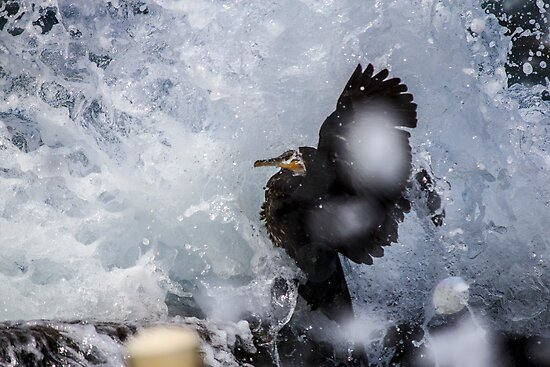 Wet Shag by Doug Cliff