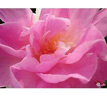 flower 20 Photographic Print