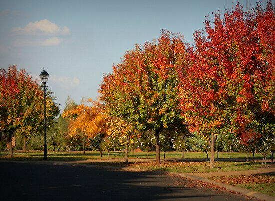 Shades of Autumn by myraj