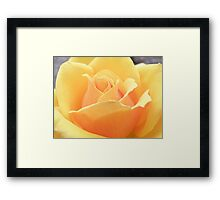 Sunkissed Apricots Framed Print