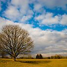 Lonely tree in a landscape by Christina  Antoniadou
