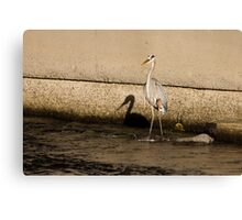 Shadow of a Great Blue Heron Canvas Print