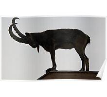 Asiatiac Ibex Poster