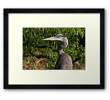 Great Blue Heron profile Framed Print