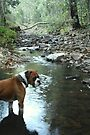 Rocky in the Creek by Vanessa Barklay