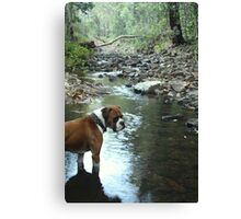 Rocky in the Creek Canvas Print
