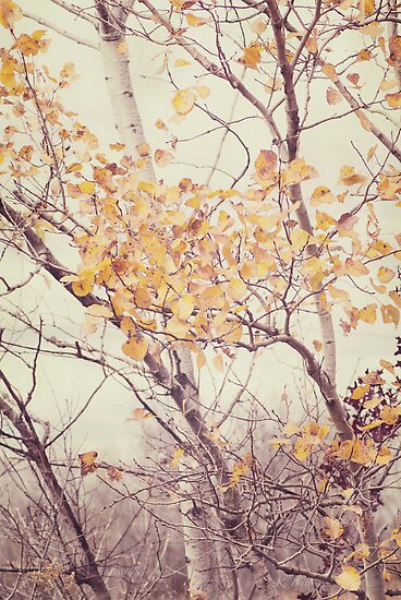 Autumn Birch by KBritt