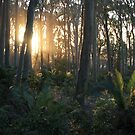 Sunlit Forest by Tim Coleman