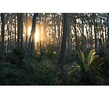 Sunlit Forest Photographic Print