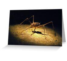 Cave Weta Greeting Card