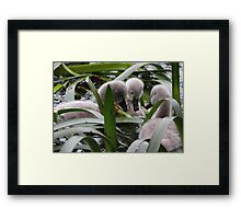 """What the hell is that?"" Framed Print"