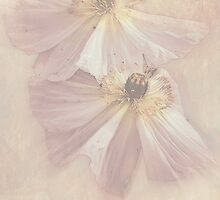 """Delicate & Precious............."" by Rosehaven"