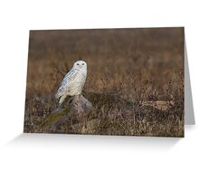 Snowy Owl on a Rock Greeting Card
