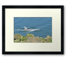 Jump , Jump - Please Framed Print