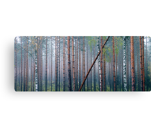 9.10.2012: Autumn in the Forest I Canvas Print