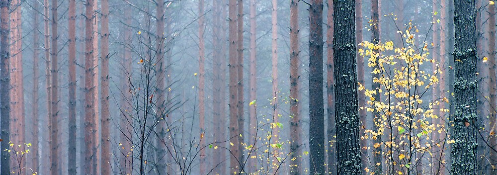 9.10.2012: Autumn in the Forest II by Petri Volanen