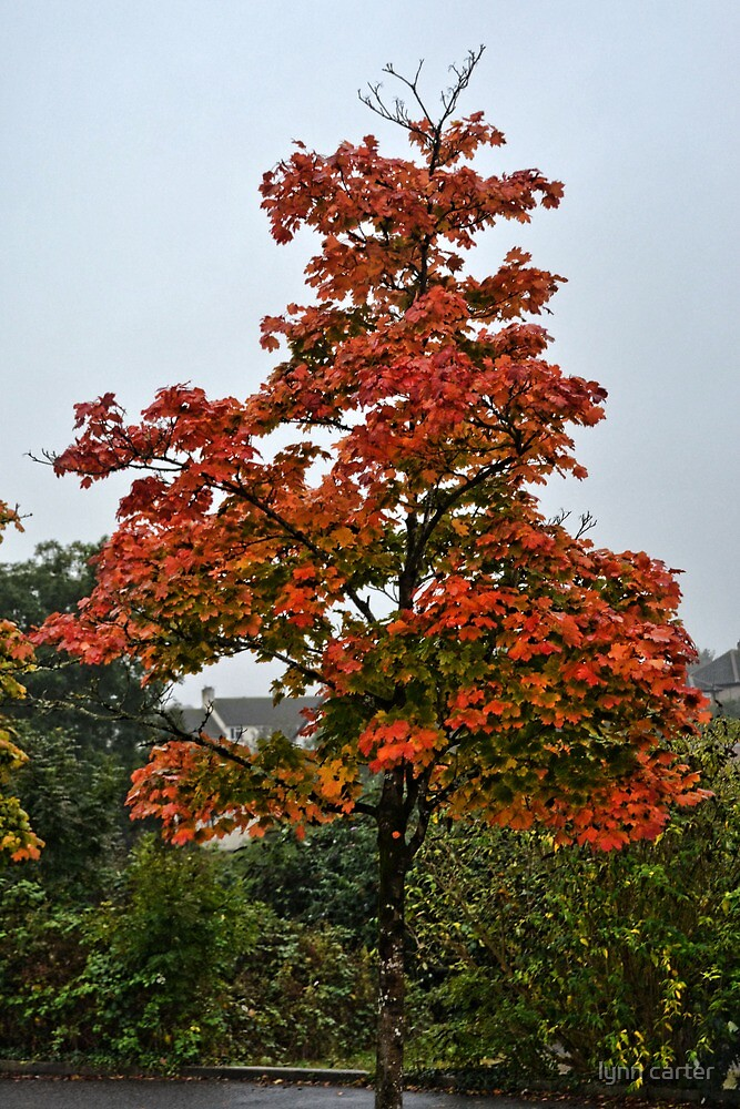 Bright And Beautiful Tree by lynn carter