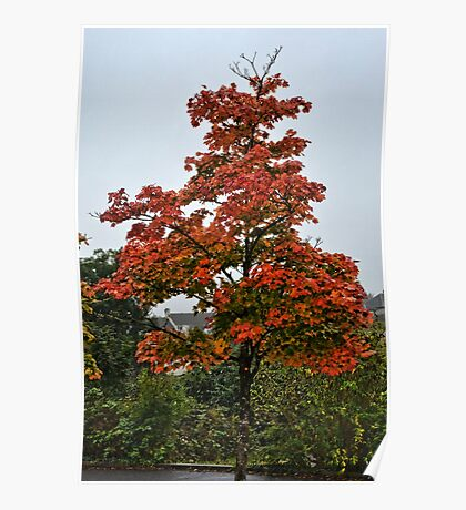 Bright And Beautiful Tree Poster