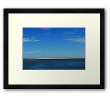 Wheeling free over the sea - Inverloch, Victoria Framed Print