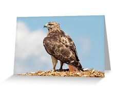 Redtail Hawk atop a woodchip pile Greeting Card