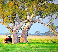 The Gum Tree paddock by George Petrovsky