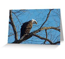 Bald Eagle with blue sky Greeting Card