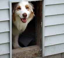 Hi.............please come in by Heidi Mooney-Hill