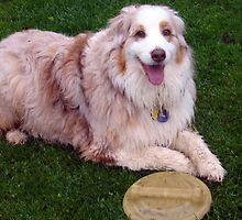 Frisbee, I just love it by Heidi Mooney-Hill