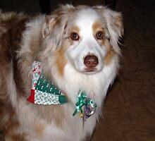 I wish everyone a Merry Xmas by Heidi Mooney-Hill