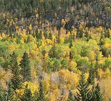 Fall Colors Spearfish Canyon by WILDBRIMOWILDMAN