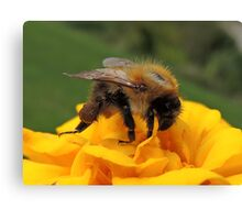 Bumble Bee 13 Canvas Print