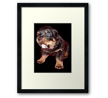 Rottweiler Puppy Isolated On Black Framed Print