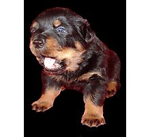 Rottweiler Puppy Isolated On Black Photographic Print