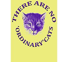 There Are No Ordinary Cats Photographic Print