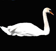 Swan on Black Sea! by alanf1