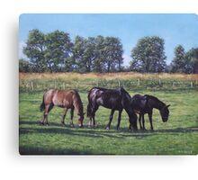 three horses in field Canvas Print