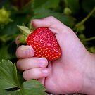 Fresh picked by Renee Eppler