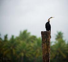waiting....  by Sajeev Chandrasekhara Pillai