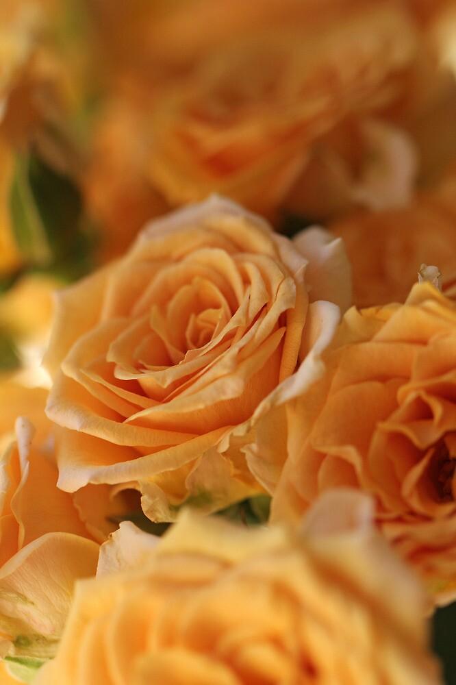 So Many Roses by Lynn Gedeon
