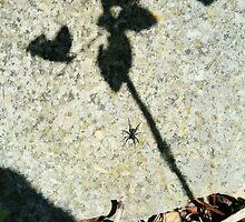 Spider on Granite by Áine Warren
