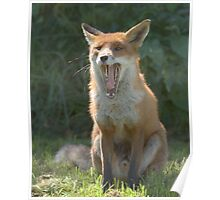 Toothy fox Poster
