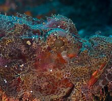 Close-up Scorpionfish by Kenji Ashman