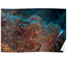 Close-up Scorpionfish Poster