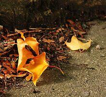 Autumn Leaves by Áine Warren