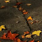 Leaves on a Cracked Pavement by Áine Warren