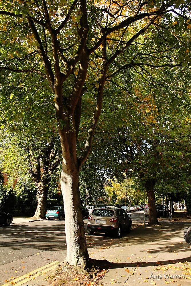 Sunlit Street by Áine Warren