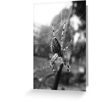 Black And White Spider Greeting Card